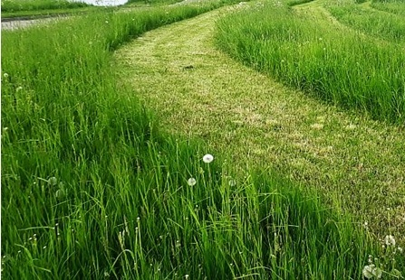 Łąki kwietne na Aniołkach będą cieszyć już tego lata