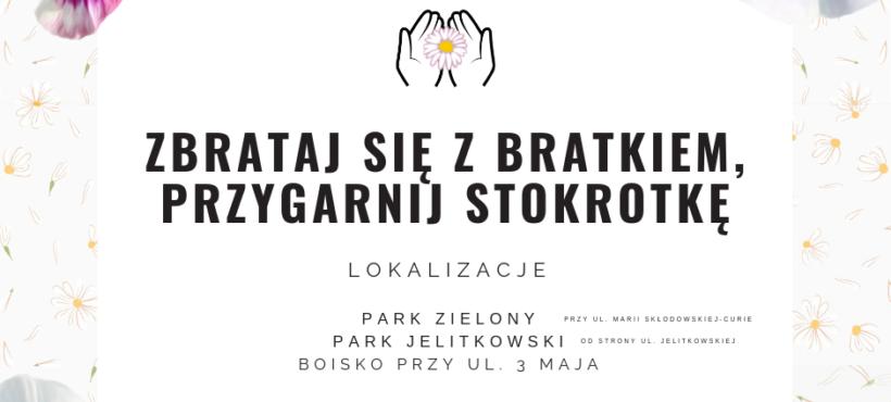 Bratki i stokrotki z miejskich kwietników do odbioru w sobotę 18 maja 2019 r. na Aniołkach