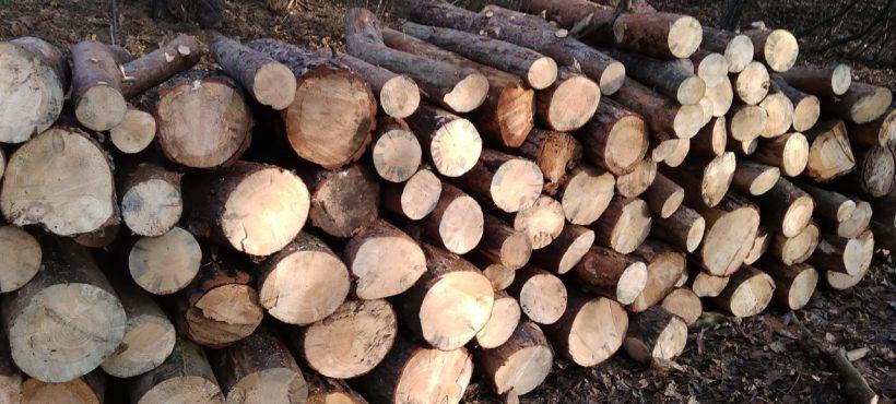 Wycinka drzew na Wroniej Górce