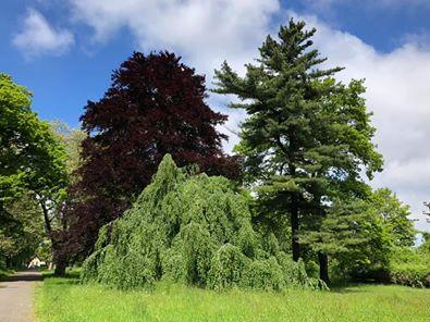 Zielone unikaty w Parku Steffensów